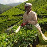 Inde - Kerala - Plantation - Voyages personnalisés